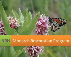 Monarch Restoration for web